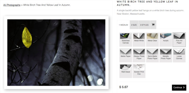 White Birch Tree And Yellow Leaf In Autumn - Purchase Wall Art